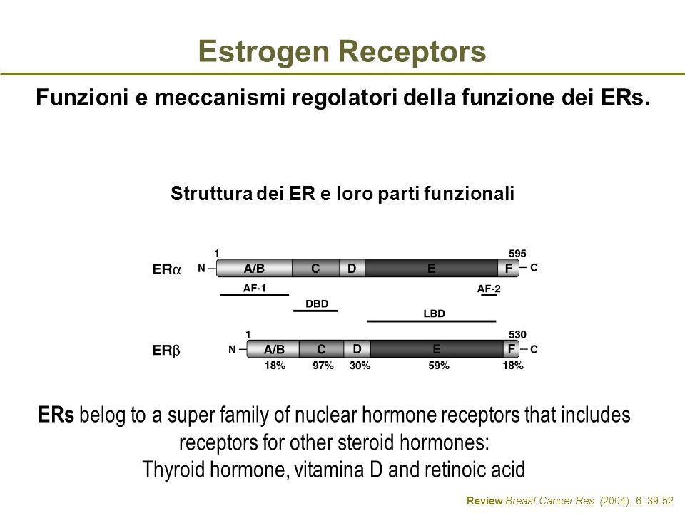 Struttura dei ER e loro parti funzionali Review Breast Cancer Res (2004), 6: 39-52 Funzioni e meccanismi regolatori della funzione dei ERs. Estrogen R