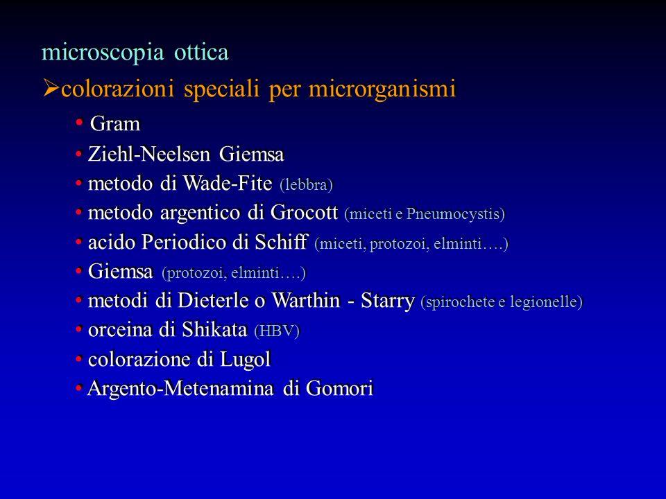 microscopia ottica colorazioni speciali per microrganismi Gram Ziehl-Neelsen Giemsa metodo di Wade-Fite (lebbra) metodo argentico di Grocott (miceti e