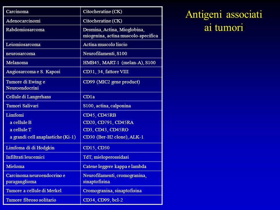 Antigeni associati ai tumori CarcinomaCitocheratine (CK) AdenocarcinomiCitocheratine (CK) RabdomiosarcomaDesmina, Actina, Mioglobina, miogenina, actin