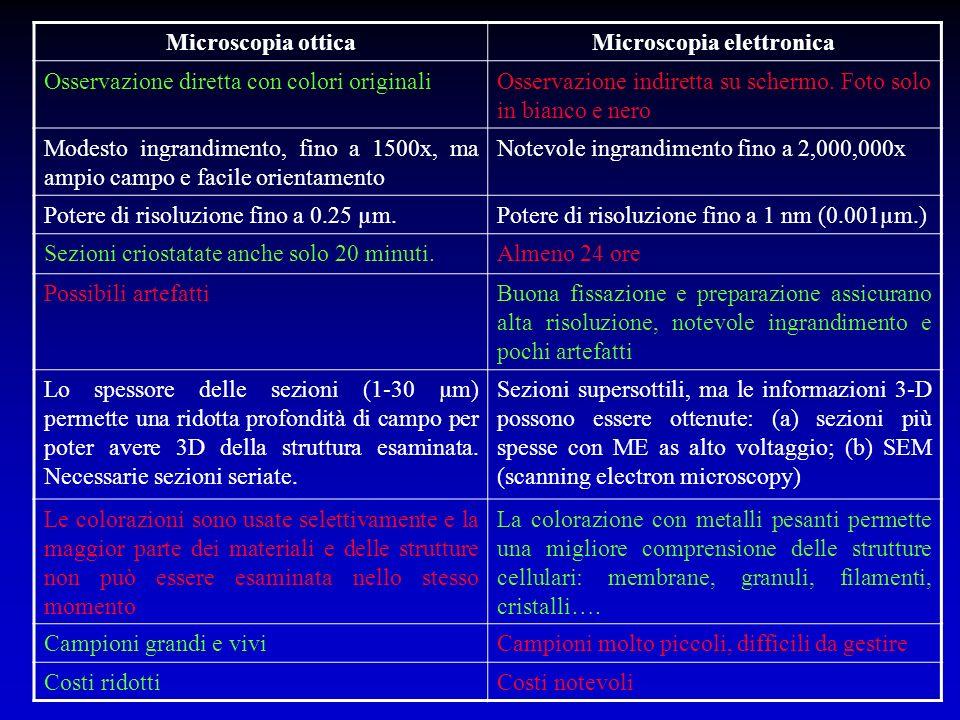 Microscopia otticaMicroscopia elettronica Osservazione diretta con colori originaliOsservazione indiretta su schermo. Foto solo in bianco e nero Modes