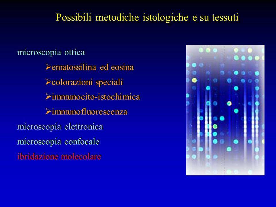 microscopia ottica ematossilina ed eosina colorazioni speciali immunocito-istochimica immunofluorescenza microscopia elettronica microscopia confocale