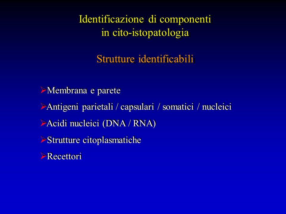 Identificazione cellulare EpitelialiCitocheratine (CK) MesenchimaliVimentina MuscolariDesmina Actine Mioglobina miogenina NeuronaliS-100 GFAP Neurofilamenti CD57 (NK o tumori neuronali) EndotelialiCD31 CD34 Fattore VIII MelanocitiHMB45 MART-1 S100 LinfoidiKappa e lambda CD3, 15, 20, 30, 45, 68, 79a ALK-1 TdT SalivariS100, actina
