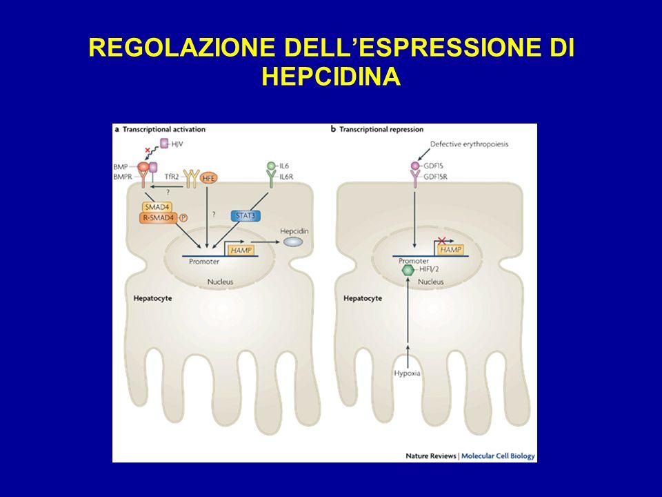 REGOLAZIONE DELLESPRESSIONE DI HEPCIDINA