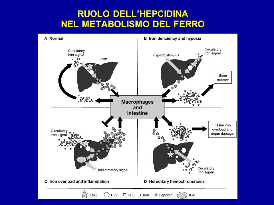 RUOLO DELLHEPCIDINA NEL METABOLISMO DEL FERRO