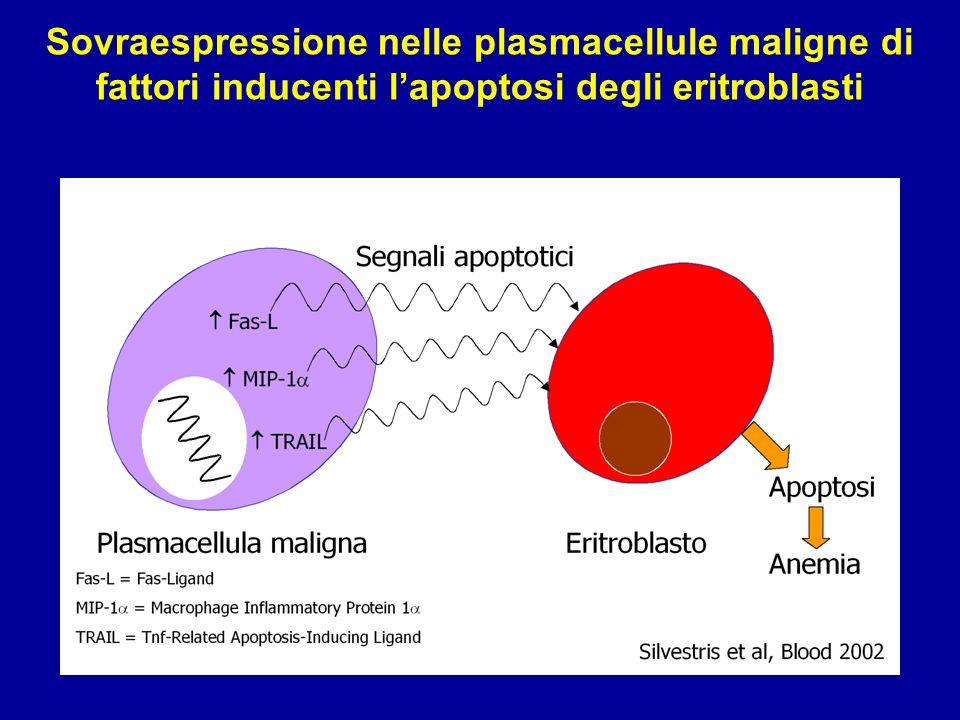 Sovraespressione nelle plasmacellule maligne di fattori inducenti lapoptosi degli eritroblasti