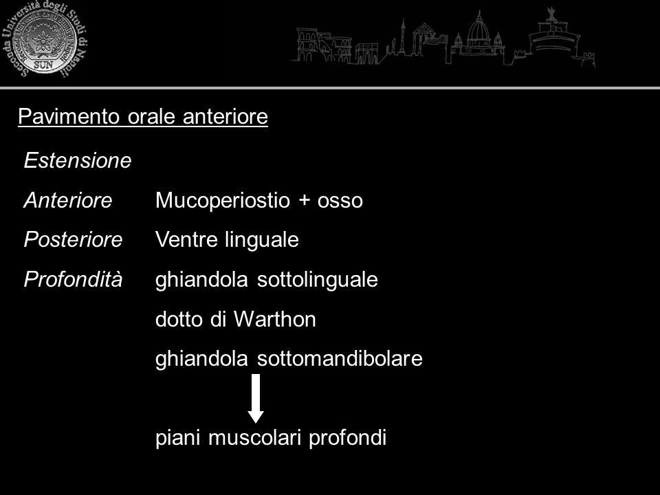 Pavimento orale anteriore Estensione Anteriore Mucoperiostio + osso PosterioreVentre linguale Profonditàghiandola sottolinguale dotto di Warthon ghian
