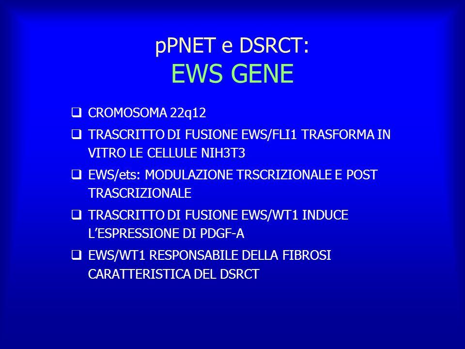 pPNET e DSRCT: EWS GENE CROMOSOMA 22q12 TRASCRITTO DI FUSIONE EWS/FLI1 TRASFORMA IN VITRO LE CELLULE NIH3T3 EWS/ets: MODULAZIONE TRSCRIZIONALE E POST