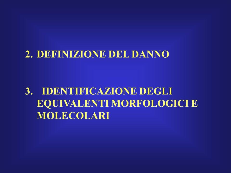 2.DEFINIZIONE DEL DANNO 3. IDENTIFICAZIONE DEGLI EQUIVALENTI MORFOLOGICI E MOLECOLARI