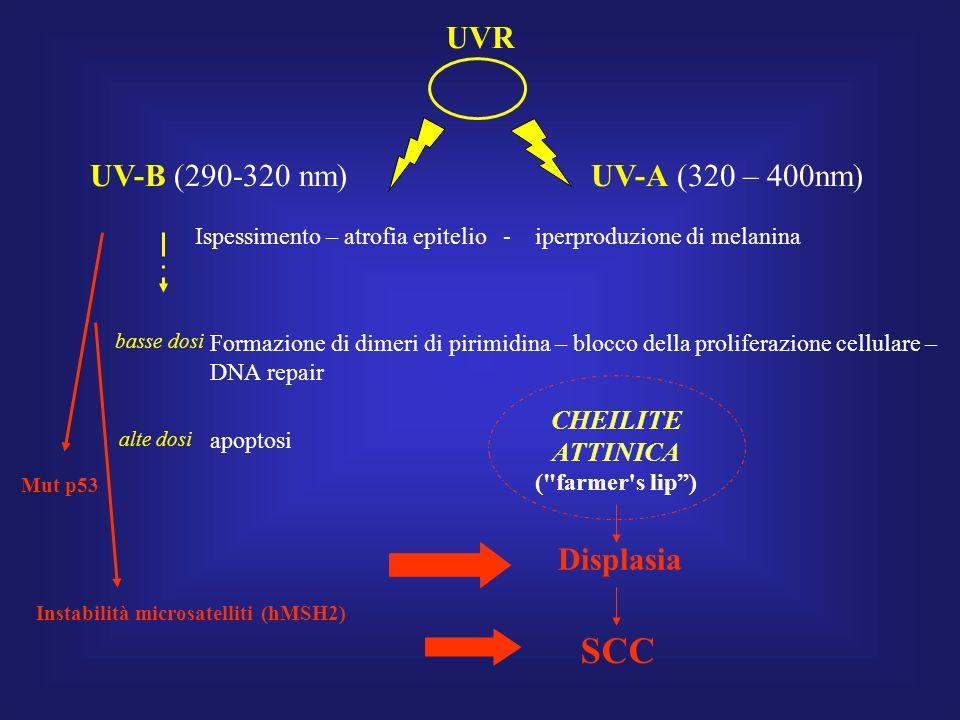 UVR UV-B (290-320 nm) UV-A (320 – 400nm) Ispessimento – atrofia epitelio - iperproduzione di melanina Formazione di dimeri di pirimidina – blocco della proliferazione cellulare – DNA repair basse dosi alte dosi apoptosi Mut p53 Instabilità microsatelliti (hMSH2) SCC Displasia CHEILITE ATTINICA ( farmer s lip)