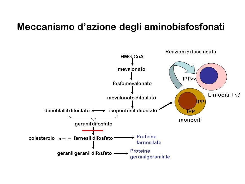 Meccanismo dazione degli aminobisfosfonati Proteine geranilgeranilate Proteine farnesilate geranil geranil difosfato farnesil difosfatocolesterolo ger