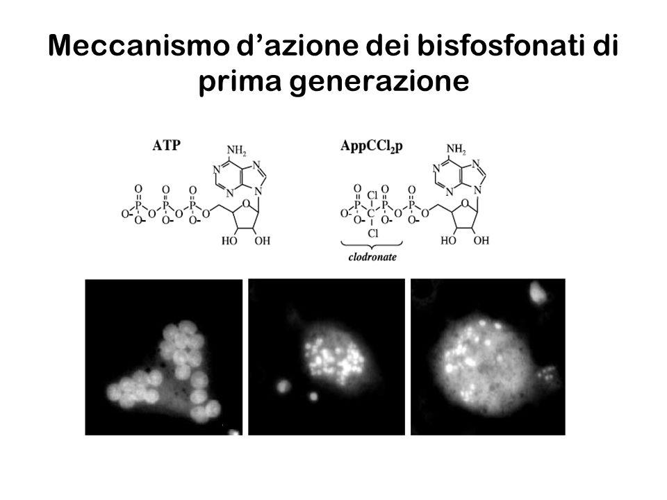 Meccanismo dazione degli aminobisfosfonati Proteine geranilgeranilate Proteine farnesilate geranil geranil difosfato farnesil difosfatocolesterolo geranil difosfato dimetilallil difosfato HMG-CoA isopentenil-difosfato mevalonato difosfato fosfomevalonato mevalonato BIS UPTAKE PERDITA DI FUNZIONE APOPTOSI