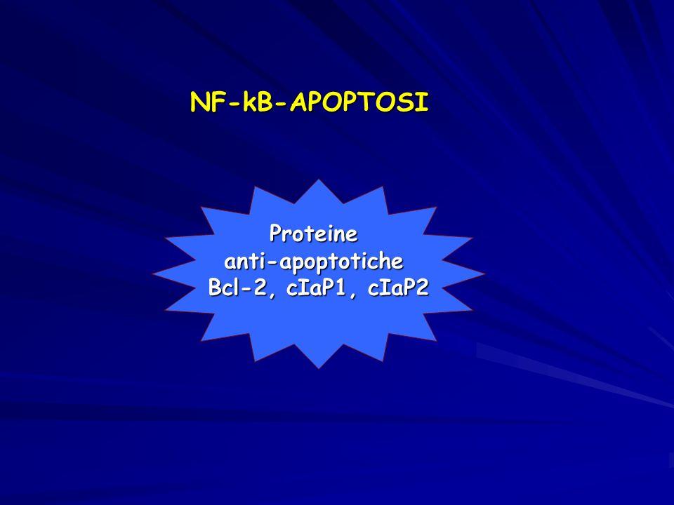 NF-kB-APOPTOSI Proteineanti-apoptotiche Bcl-2, cIaP1, cIaP2