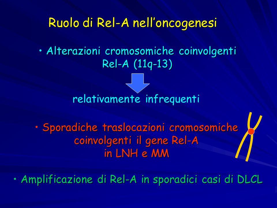 Amplificazione di Rel-A in sporadici casi di DLCL Alterazioni cromosomiche coinvolgenti Rel-A (11q-13) relativamente infrequenti Ruolo di Rel-A nellon