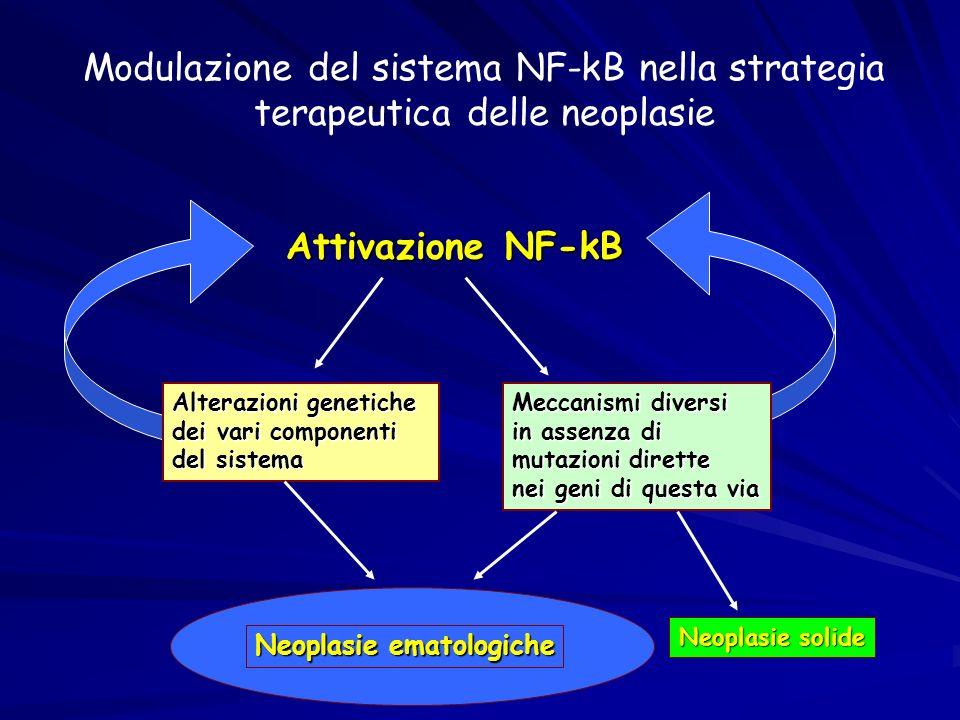 Ruolo di Bcl-3 nelloncogenesi Proteina Bcl-3 strutturalmente correlata alla famiglia dei regolatori IkB di Rel/NF-KB Bcl-3 è presente nel nucleo ove interagisce con omodimeri di p50 e p52 alterandone la loro attività DNA legante e modulando lespressione genica Bcl-3 è presente nel nucleo ove interagisce con omodimeri di p50 e p52 alterandone la loro attività DNA legante e modulando lespressione genica Bcl-3 favorisce la trascrizione NF-kB mediata rimuovendo dal DNA omodimeri p50 inattivi Bcl-3 favorisce la trascrizione NF-kB mediata rimuovendo dal DNA omodimeri p50 inattivi Bcl-3 agisce come co-attivatore per omodimeri p52 Bcl-3 agisce come co-attivatore per omodimeri p52