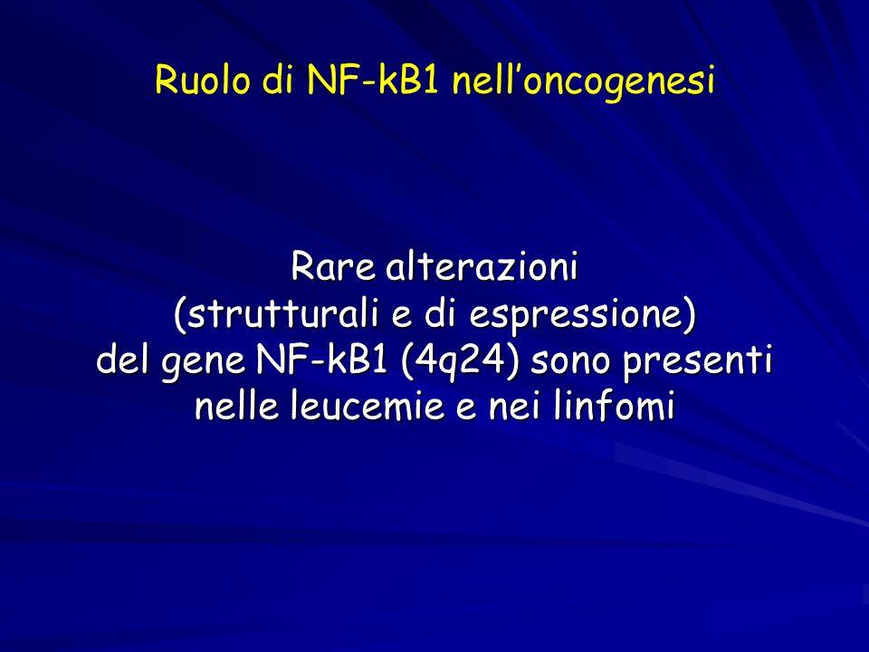 Ruolo di NF-kB1 nelloncogenesi Rare alterazioni (strutturali e di espressione) del gene NF-kB1 (4q24) sono presenti nelle leucemie e nei linfomi
