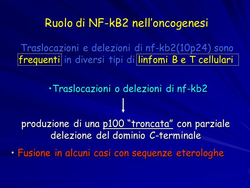 Traslocazioni e delezioni di nf-kb2(10p24) sono frequenti in diversi tipi di linfomi B e T cellulari Traslocazioni o delezioni di nf-kb2Traslocazioni