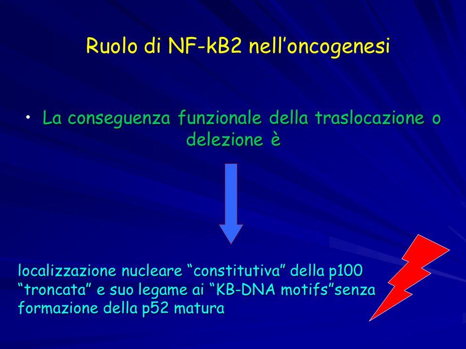 La conseguenza funzionale della traslocazione o delezione è localizzazione nucleare constitutiva della p100 troncata e suo legame ai KB-DNA motifssenz