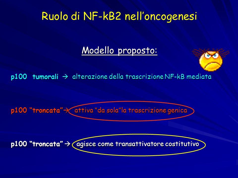 Ruolo di NF-kB2 nelloncogenesi Modello proposto: p100 tumorali alterazione della trascrizione NF-kB mediata p100 troncata attiva da solala trascrizion