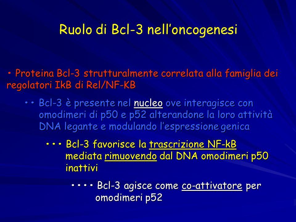 Ruolo di Bcl-3 nelloncogenesi Proteina Bcl-3 strutturalmente correlata alla famiglia dei regolatori IkB di Rel/NF-KB Bcl-3 è presente nel nucleo ove i