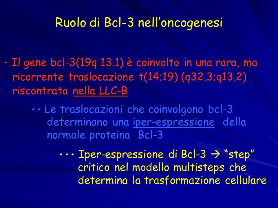 Ruolo di Bcl-3 nelloncogenesi Il gene bcl-3(19q 13.1) è coinvolto in una rara, ma ricorrente traslocazione t(14;19) (q32.3;q13.2) riscontrata nella LL