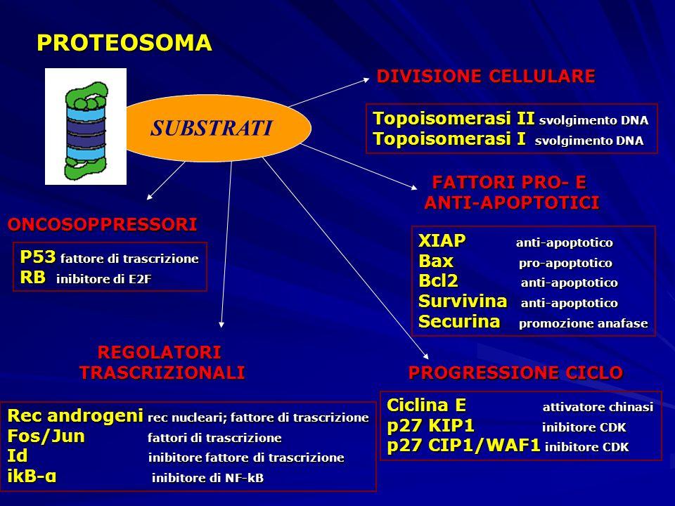 DIVISIONE CELLULARE FATTORI PRO- E ANTI-APOPTOTICI PROGRESSIONE CICLO REGOLATORITRASCRIZIONALI ONCOSOPPRESSORI Topoisomerasi II svolgimento DNA Topois