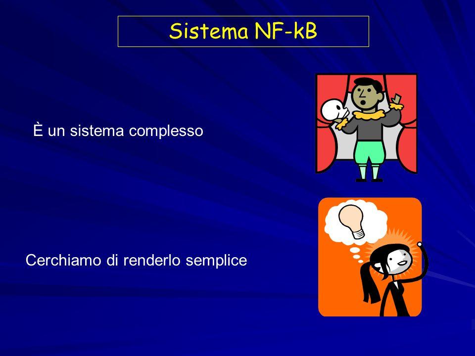Ruolo della inattivazione di IkB nelloncogenesi IkB inibitore di NF-kB Iper-espressione antisenso di trascritti Ikb trasformazione di cellule murine NIH Iper-espressione antisenso di trascritti Ikb trasformazione di cellule murine NIH Ridotta attività di IkB correla persistente localizzazione nucleare di NF-kB e suo legame con il DNA ed attività transattivante Ridotta attività di IkB correla persistente localizzazione nucleare di NF-kB e suo legame con il DNA ed attività transattivante
