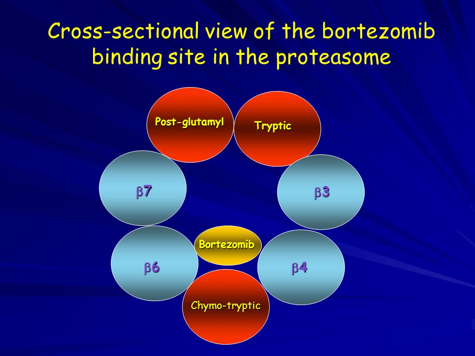 Post-glutamyl Tryptic 7 6 3 4 Bortezomib Cross-sectional view of the bortezomib binding site in the proteasome Chymo-tryptic