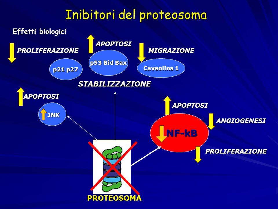 APOPTOSI STABILIZZAZIONE PROLIFERAZIONEMIGRAZIONE p21 p27 p53 Bid Bax Caveolina 1 APOPTOSI PROLIFERAZIONE ANGIOGENESI APOPTOSI JNK JNK NF-kB NF-kB PRO