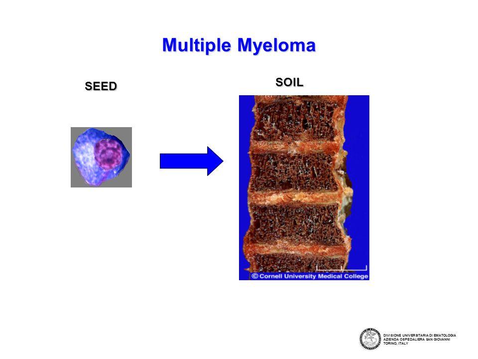 Multiple Myeloma SEED DIVISIONE UNIVERSITARIA DI EMATOLOGIA AZIENDA OSPEDALIERA SAN GIOVANNI TORINO, ITALY SOIL