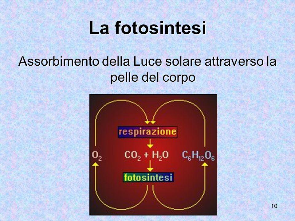 10 La fotosintesi Assorbimento della Luce solare attraverso la pelle del corpo