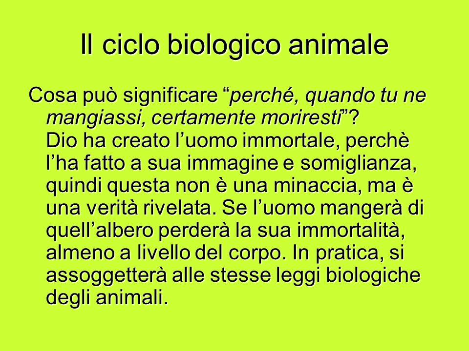 Il ciclo biologico animale Cosa può significare perché, quando tu ne mangiassi, certamente moriresti? Dio ha creato luomo immortale, perchè lha fatto