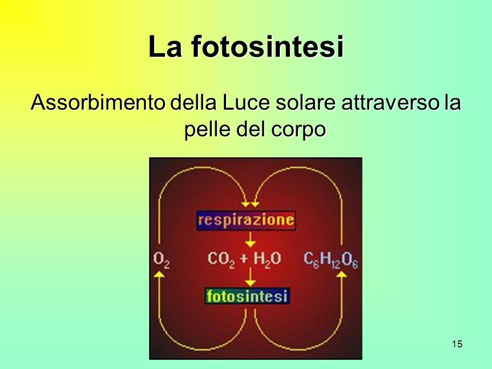 15 La fotosintesi Assorbimento della Luce solare attraverso la pelle del corpo
