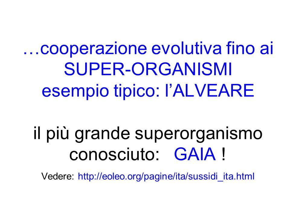 …cooperazione evolutiva fino ai SUPER-ORGANISMI esempio tipico: lALVEARE il più grande superorganismo conosciuto: GAIA .