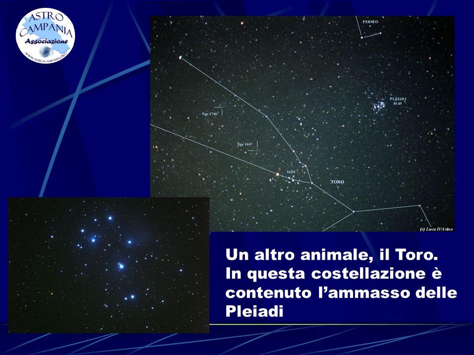 Un altro animale, il Toro. In questa costellazione è contenuto lammasso delle Pleiadi