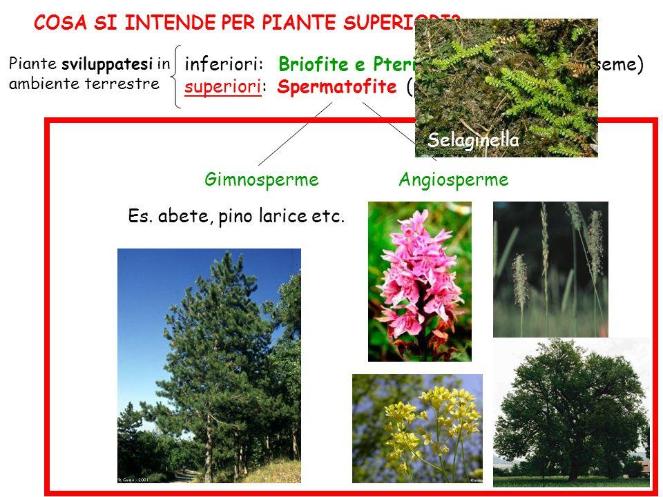 inferiori: Briofite e Pteridofite (piante non a seme) superiori: Spermatofite (piante a seme) Gimnosperme Angiosperme Es.