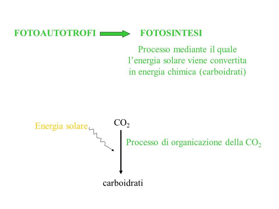 FOTOAUTOTROFIFOTOSINTESI Processo mediante il quale lenergia solare viene convertita in energia chimica (carboidrati) CO 2 carboidrati Energia solare Processo di organicazione della CO 2