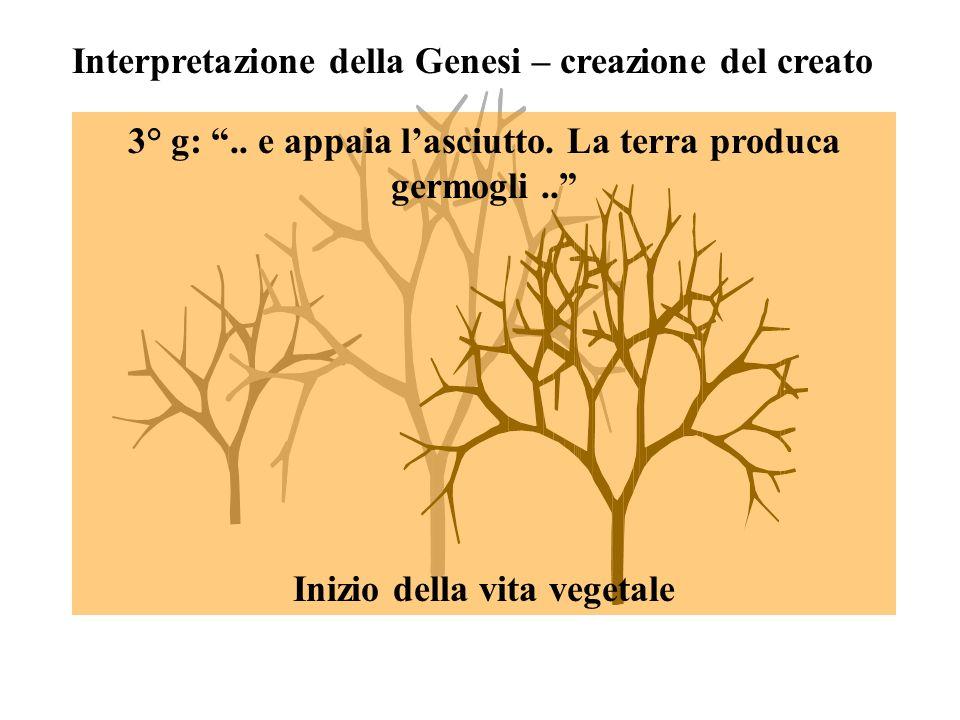 Interpretazione della Genesi – creazione del creato 3° g:..