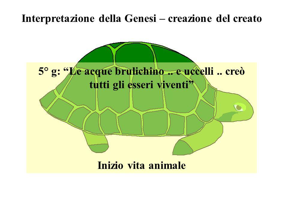 Interpretazione della Genesi – creazione del creato 5° g: Le acque brulichino..