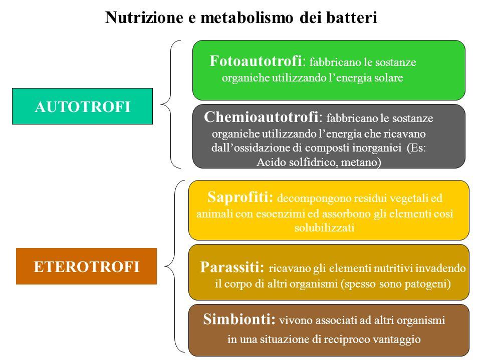 Nutrizione e metabolismo dei batteri AUTOTROFI ETEROTROFI Fotoautotrofi: fabbricano le sostanze organiche utilizzando lenergia solare Chemioautotrofi: