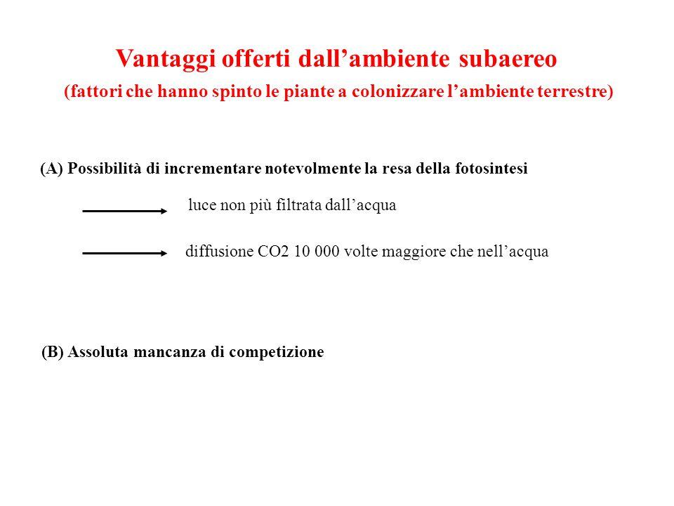 Vantaggi offerti dallambiente subaereo (fattori che hanno spinto le piante a colonizzare lambiente terrestre) (A) Possibilità di incrementare notevolm