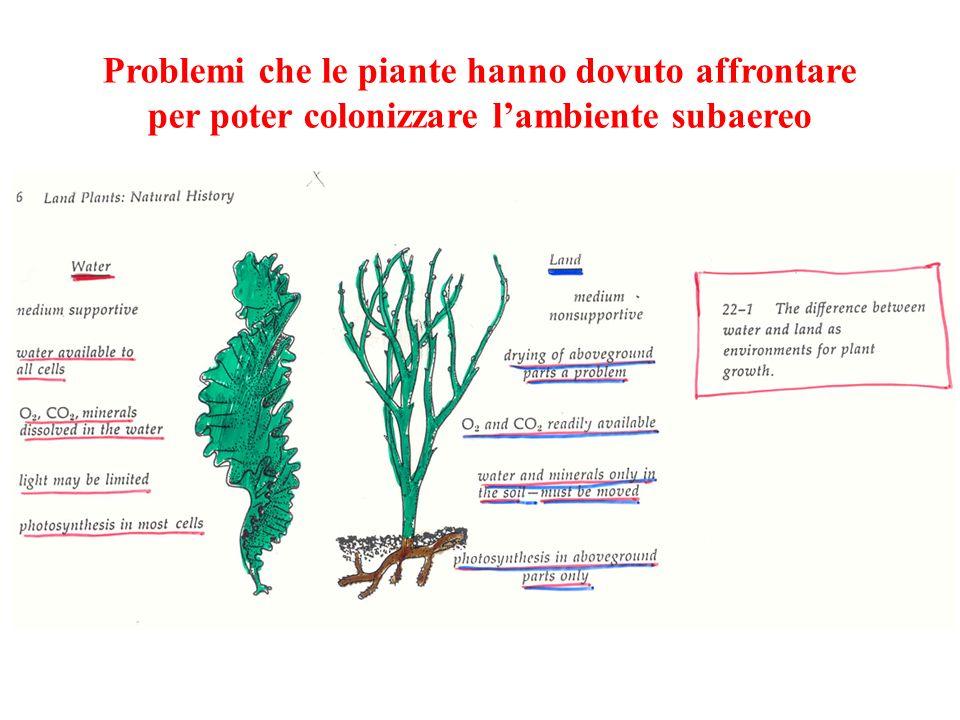 Problemi che le piante hanno dovuto affrontare per poter colonizzare lambiente subaereo