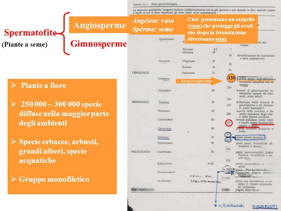 Spermatofite Angiosperme (Piante a seme) Gimnosperme Angiosperme Piante a fiore 250 000 – 300 000 specie diffuse nella maggior parte degli ambienti Sp