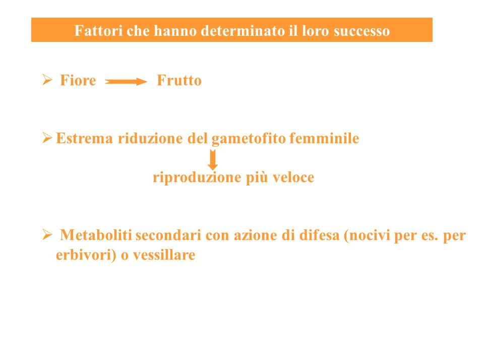 Fattori che hanno determinato il loro successo Fiore Frutto Estrema riduzione del gametofito femminile riproduzione più veloce Metaboliti secondari co