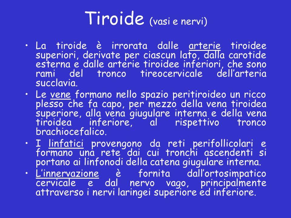 Tiroide (vasi e nervi) La tiroide è irrorata dalle arterie tiroidee superiori, derivate per ciascun lato, dalla carotide esterna e dalle arterie tiroi