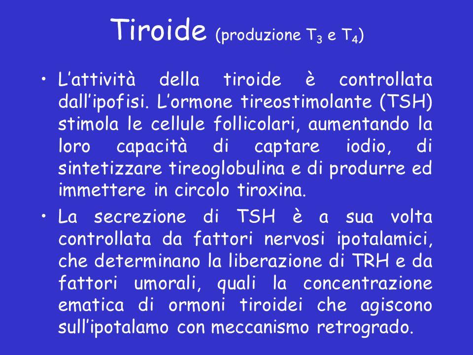 Tiroide (produzione T 3 e T 4 ) Lattività della tiroide è controllata dallipofisi. Lormone tireostimolante (TSH) stimola le cellule follicolari, aumen