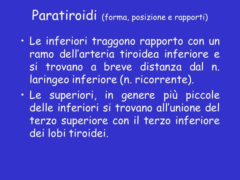 Paratiroidi (forma, posizione e rapporti) Le inferiori traggono rapporto con un ramo dellarteria tiroidea inferiore e si trovano a breve distanza dal