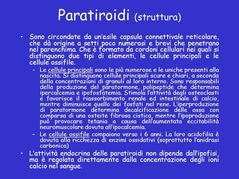 Paratiroidi (struttura) Sono circondate da unesile capsula connettivale reticolare, che dà origine a setti poco numerosi e brevi che penetrano nel par