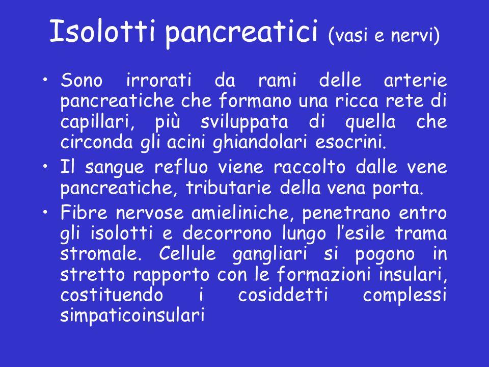 Isolotti pancreatici (vasi e nervi) Sono irrorati da rami delle arterie pancreatiche che formano una ricca rete di capillari, più sviluppata di quella