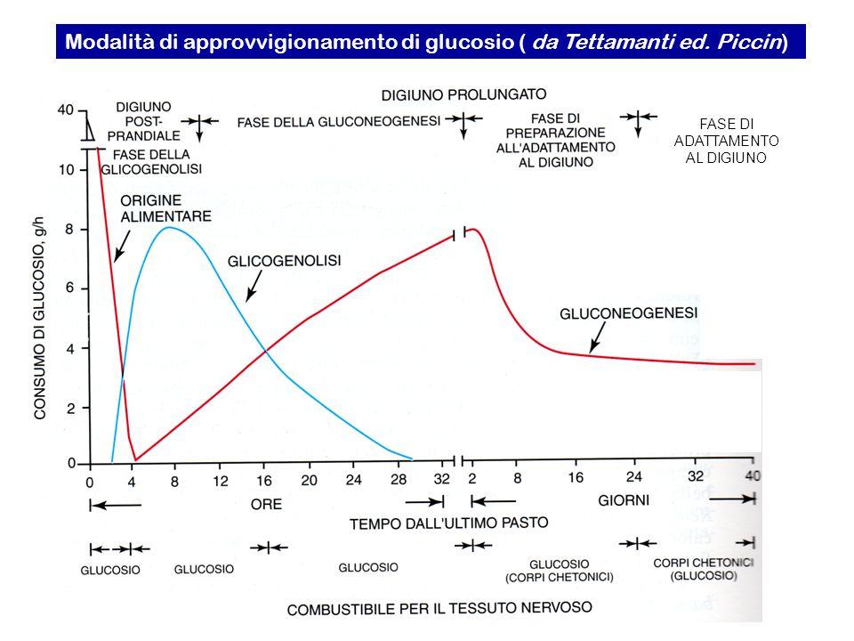 FASE DI ADATTAMENTO AL DIGIUNO Modalità di approvvigionamento di glucosio ( da Tettamanti ed. Piccin)