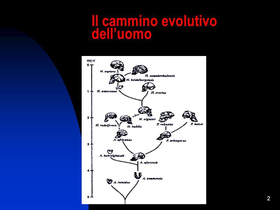 CORSO DI AGGIORNAMENTO IN BIOETICA - MODULO BASE 2 Il cammino evolutivo delluomo